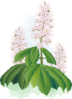 Chestnut Blossoms, Flowers, Plants, Pink Flowers, Flora