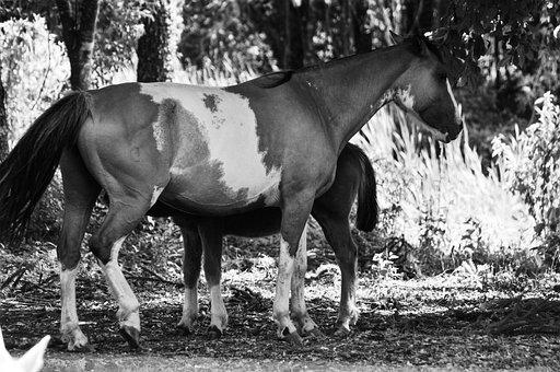 Horses, Farm, Horse, Animal, Nature, Equine, Mammal