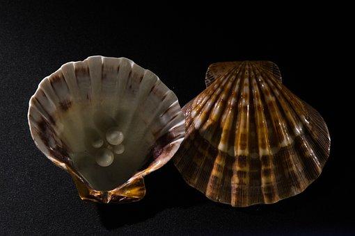 Pearl, Oyster, Shells, Mussels, Seashells, Decorative