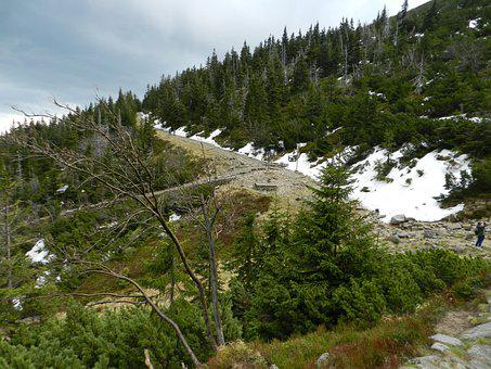 Mountain, Trees, Trail, Path, Forest, Snow