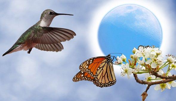 Hummingbird, Butterfly, Pear Tree Bloom, Flowers, Moon