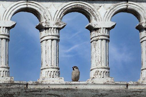 Sparrow, Arches, Ruin, Perched, Bird, Animal, Wildlife