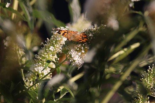 Butterfly, Flower, Plant, Summer, Nature, Garden