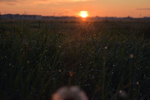 Field, Grass, Sunrise, Dew, Morning Dew, Dewdrops