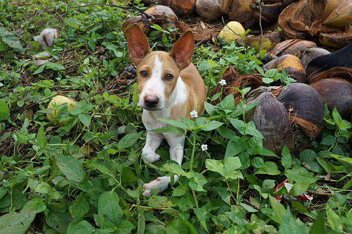 Dog, Pet, Animal, Domestic Dog, Canine, Mammal, Friend