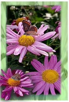 Butterfly, Insect, Flowers, Animal, Plant, Nature