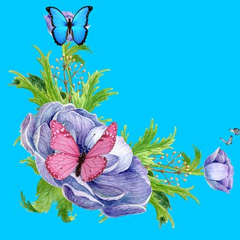 Butterflies, Flowers, Plant, Insects, Leaves, Bloom