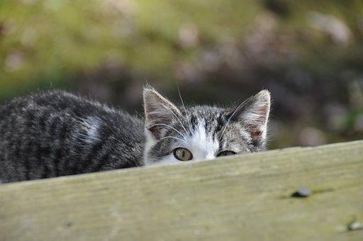 Cat, Pet, Hiding, Animal, Domestic Cat, Feline, Mammal