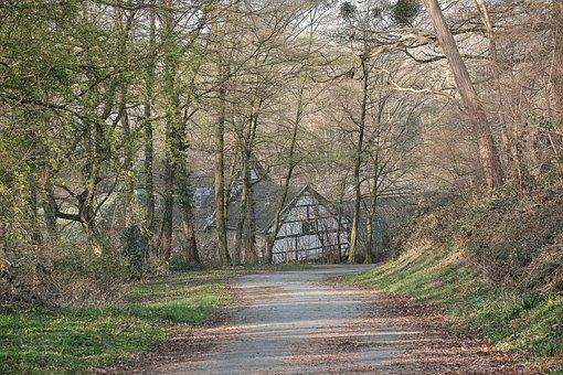 Road, Trees, Town, Pavement, Path, Woods, Landscape
