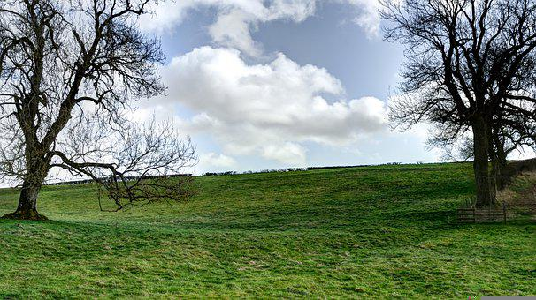 Field, Hill, Trees, Clouds, Sky, Meadow, Pasture