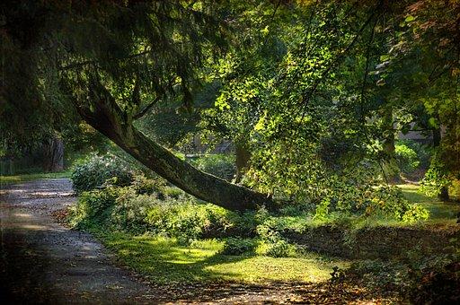 Path, Trees, Landscape, Walkway, Plants, Woods