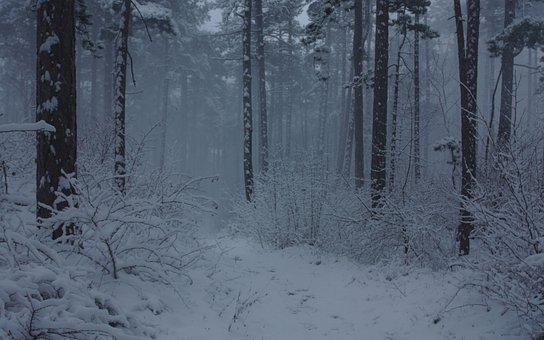 Forest, Snow, Fog, Winter, Trees, Mist, Foggy, Woods