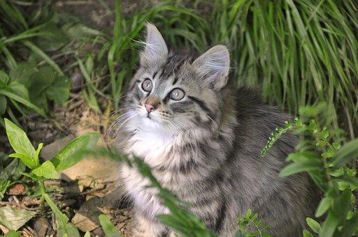 Cat, Feline, Fur, Animal, Pet, Portrait, Mammal, Cute