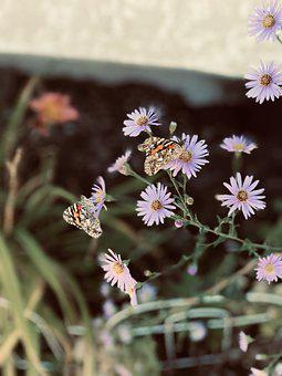 Butterfly, Flower, Spring