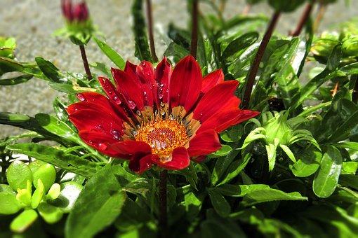 Flower, Plant, Dew, Leaves, Dewdrops, Wet, Petals