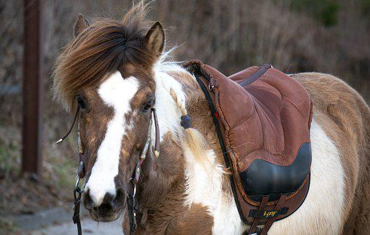 Pony, Horse, Horses, Animal, Mammal, Mane, Nature, Foal