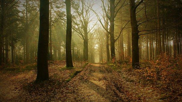 Forest, Fog, Sunrise, Trail, Path, Trees, Leaves