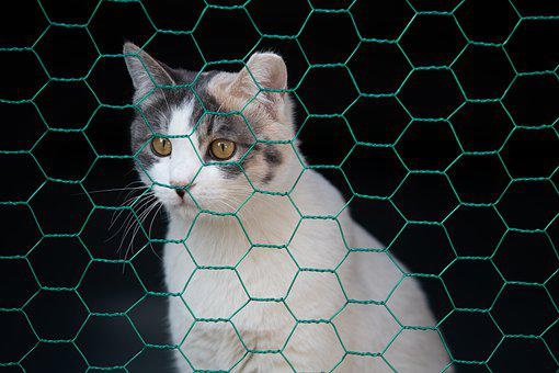 Cat, Animal, Mesh, Tabby, Pet, Street Cat, Domestic Cat
