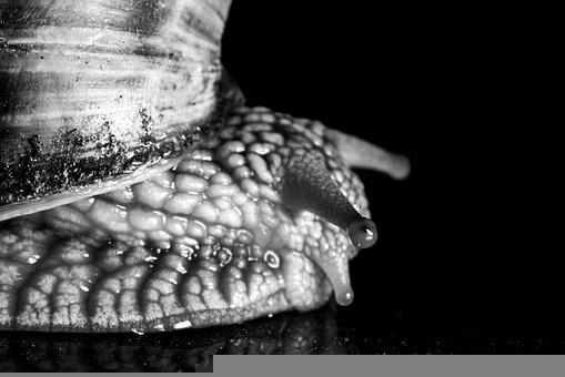Snail, Animal, Nature, Crawl, Slowly, Mucus, Creature