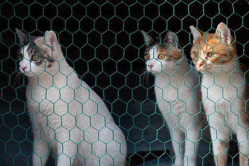 Cat, Animal, Mesh, Birth, Pet, Lee Cat, Domestic Cat