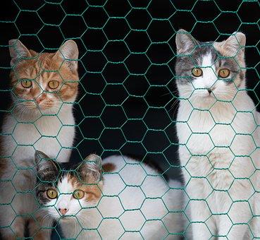 Cat, Animal, Mesh, Birth, Pets, Lee Cat, Domestic Cat