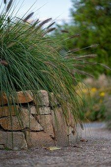 Grass, Stone Wall, Garden, Plant, Shrub, Path