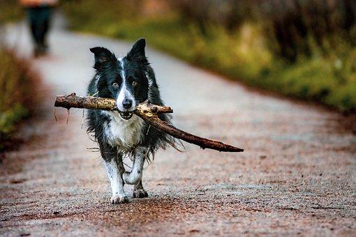 Dog, Branch, Walk, Road, Pet, Animal, Domestic Dog