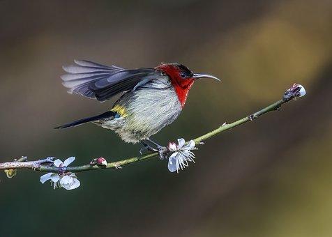Bird, Wings, Beak, Feathers, Plumagembranch, Flowers