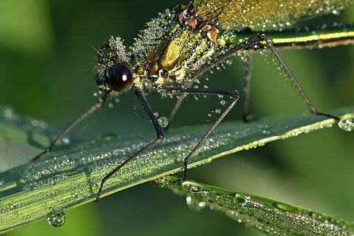 Dragonfly, Insect, Grass, Plants, Drop Of Water