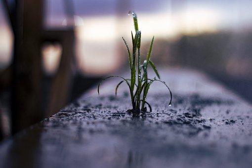 Grass, Plant, Dew, Drops, Rain, Water, Nature