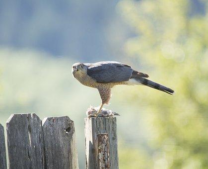 Falcon, Bird, Wood, Perched, Animal, Bird Of Prey