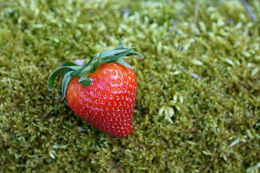 Strawberry, Fruit, Moss, Red Fruit, Berry, Organic