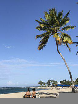 Silver Port, Landscape, Coconut, Nature