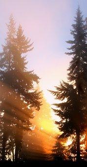 Trees, Fog, Sunrise, Sunlight, Rays, Fir, Sky