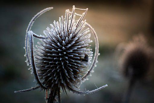 Plant, Thorny, Ice, Frost, Cold, Frozen, Nature, Snow
