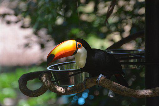 Tucano, Brazil, Nature, Fauna, Bird, Colorful, Animals