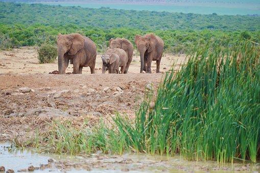 Elephant, South Africa, Addo Elephant Park