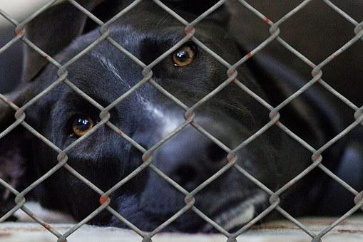 Dog, Animal Shelter, Animal Husbandry, Animal World