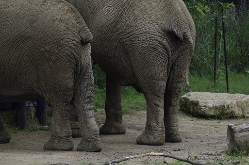 Elephants, Butts, Elephant Twins