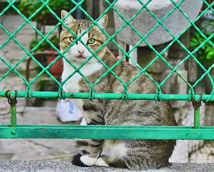 Cats, Fence, Pet, Animal, Cute, Domestic, Kitten