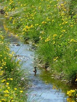 Bird, Paradise, Meadow, Countryside, Summer, Nature