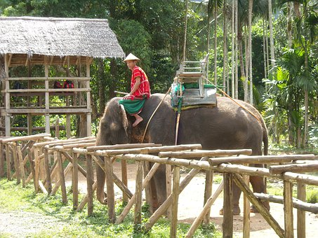 Thailand, Thai, Nature Park, Elephant, Ele, Nuturschutz