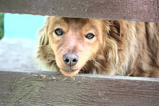 Dog, Fur, Animals, Snout, The Nose, Eyes, Furry