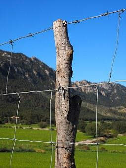 Barbed Wire Fence, Wire, Fenced, Metal, Fence, Security