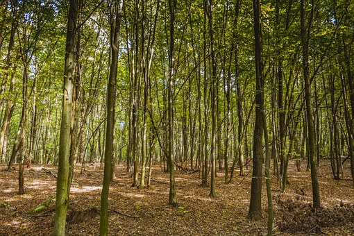 Forest, A Dense Forest, Spring, Nature, Litter, Foliage