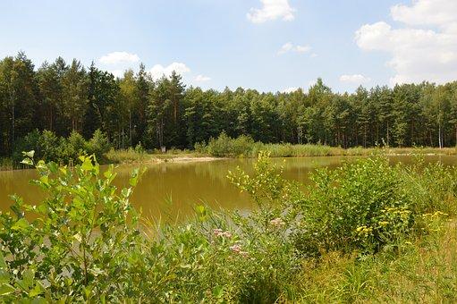 Pond, Water, Forest, Forest Pond, Landscape, Surface