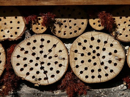 Tree Grates, Drill Holes, Insect Hotel, Insect House