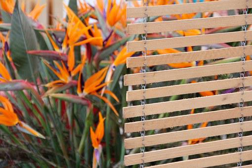 Strelizie, Parrot Bird Flower, Paradise Flower