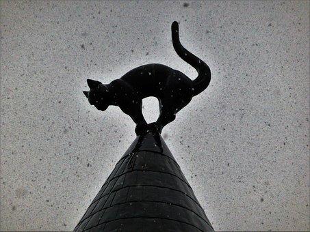 Animal, Cat, Riga, Winter, Snow, Accident, Black Cat