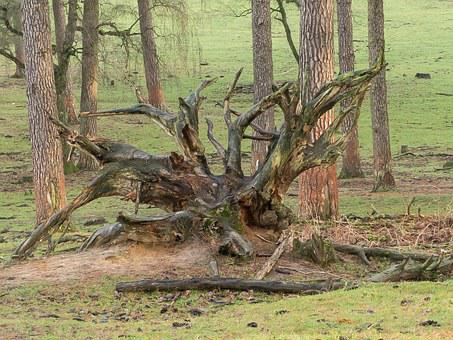 Root, Forest, Tree, Nature, Log, Overturned, Brown